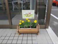 マリーゴールド2020五所川原②.JPG