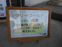 マリーゴールド2020八戸②.JPG
